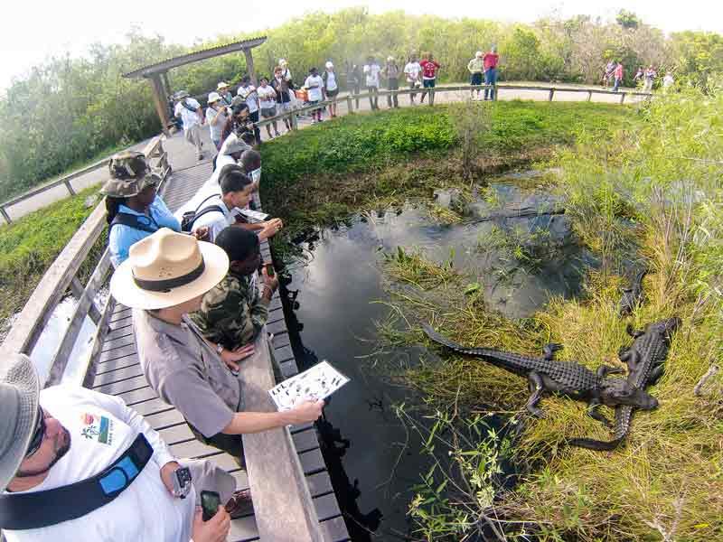 Evergladdes Boat Tour