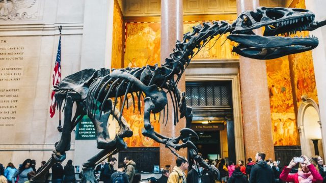 American Museum of Natural History New York cosa Vedere