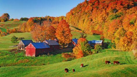 Foliage Vermont